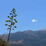 Αλίκαμπος, επαρχία Αποκορώνου Χανίων