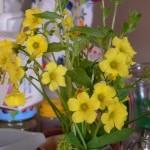 Ο Μάρτης και τα άνθη του
