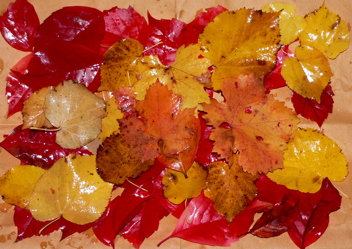 Φθινοπωρινός καμβάς