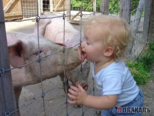 SwineKid